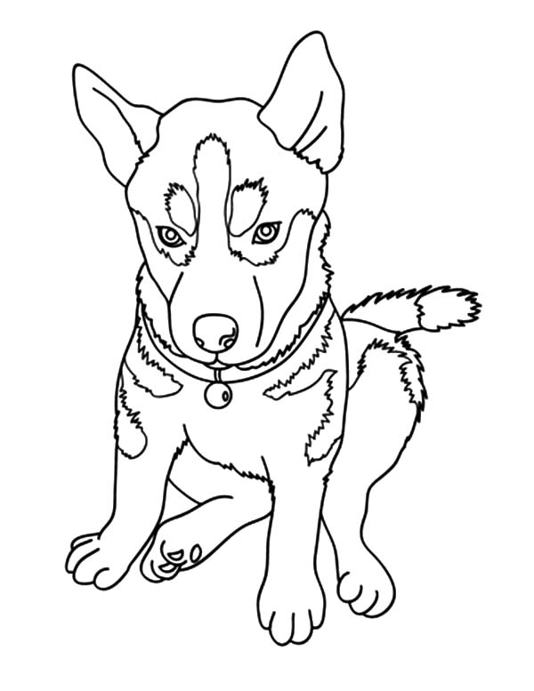 Chihuahua Dog Picture Coloring Pages Netart Chihuahua Dog Pictures Dog Coloring Page Dog Pictures