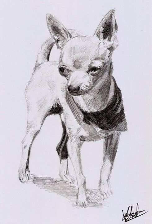 Pin By Vincent Noot On Portrait Art Vincent Noot Chihuahua Drawing Animal Drawings Dog Paintings