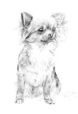 0b47b64d9736f3d2fc5201c452bb71c4 Jpg 266 387 Chihuahua Drawing Chihuahua Art Baby Animal Drawings