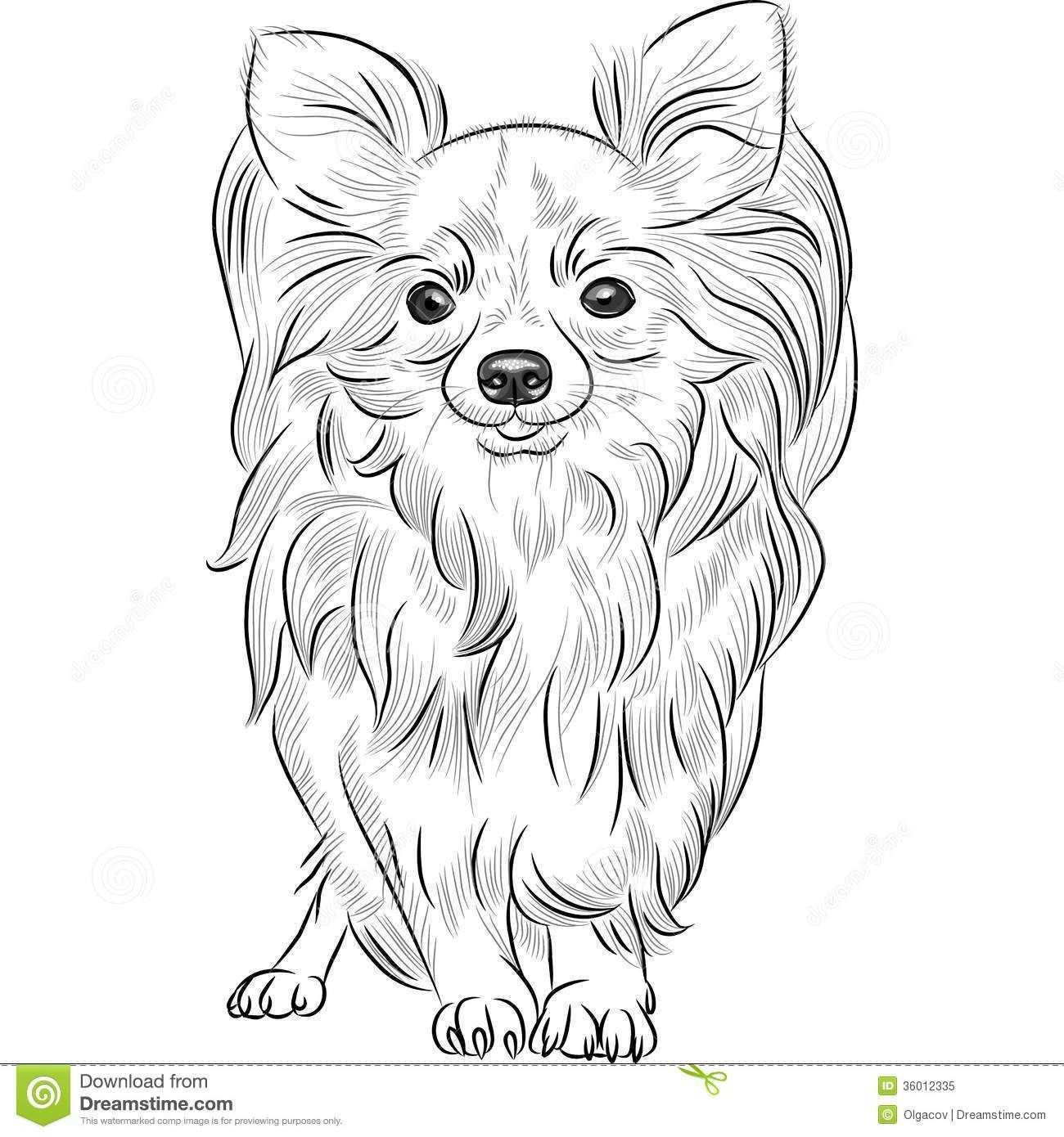 Chihuahua Sketch Google Search Borduren Kruissteek Kruissteek Kleurplaten