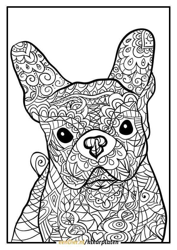 Kleurplaten Voor Volwassenen Dieren Printen Coloring And Drawing