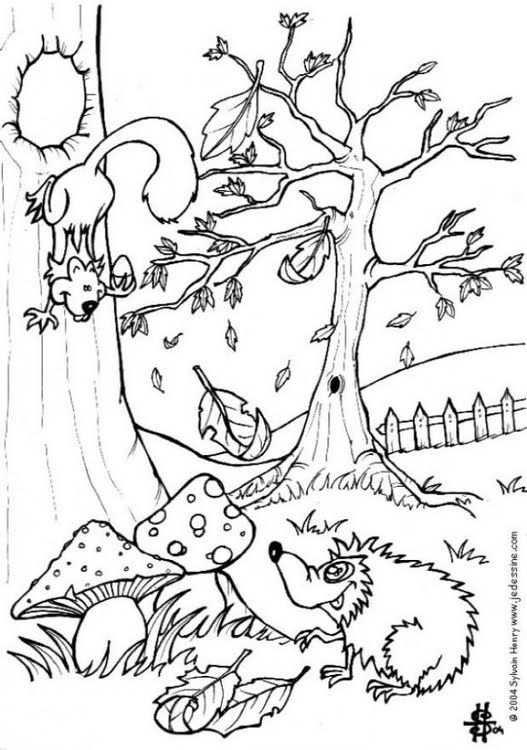 Kleurplaat Herfst Egel En Eekhoorn Afb 6444 Dieren Kleurplaten Herfst Herfst Bomen
