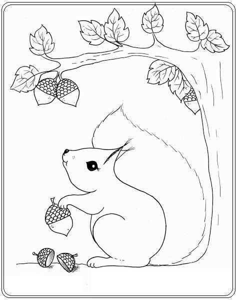 Eekhoorn Fall Coloring Pages Coloring Pages Squirrel Coloring Page