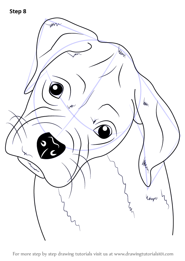 Learn How To Draw Boxer Puppy Face Farm Animals Step By Step Drawing Tutorials Dog Face Drawing Dog Stencil Boxer Dogs Art