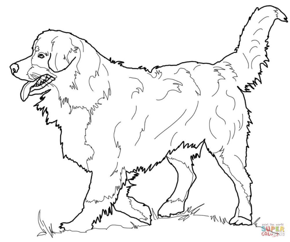Elegante Kleurplaat Boxer Hond Krijg Duizenden Kleurenfotos Van Honden Dieren Kleurplaten