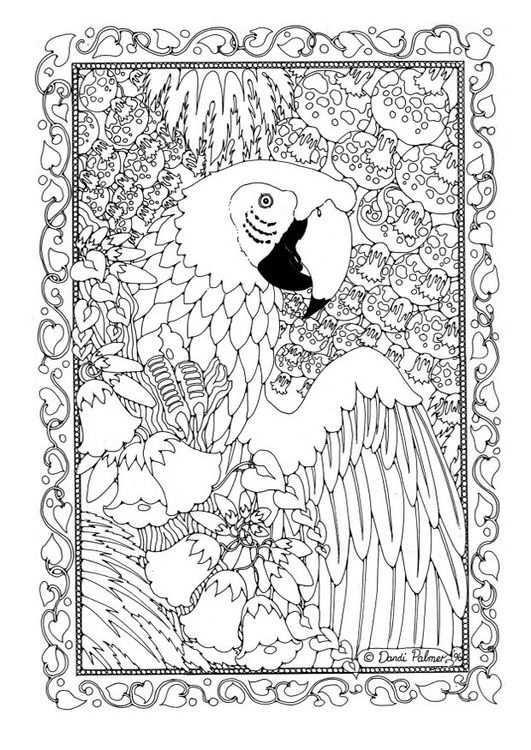 Coloring Page Parrot Img 18698 Kleurplaten Gratis Kleurplaten Dieren Kleurplaten