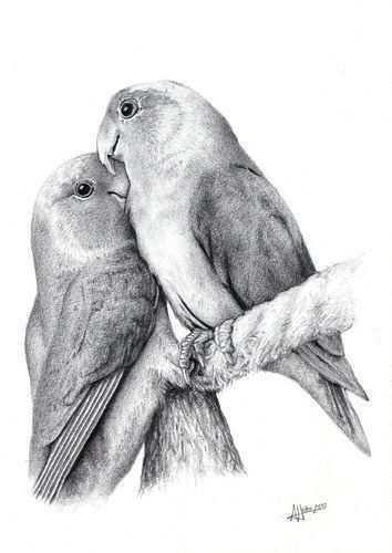 Een Projectjes Voor Http Kleurvitality Blogspot Be Vogels Tekenen Dieren Tekenen Kleurpotloodtekeningen