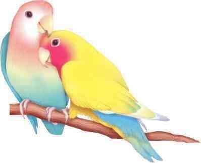 Pin Van Angie Q Op Lovebirds Parakeets Parrots Vogels Tekenen Aquarel Vogel Dieren Schilderen