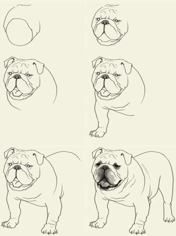 How To Draw A Dog Step By Step Easily Animal Drawings Bulldog Drawing Dog Drawing