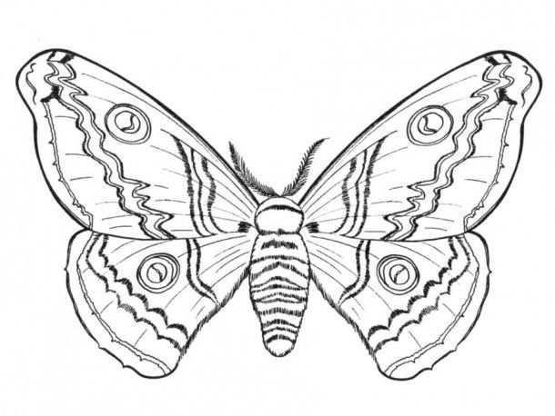 Hard Butterfly Coloring Pages Coloring University Kleurplaten Kleurplaten Voor Volwassenen Kleuren