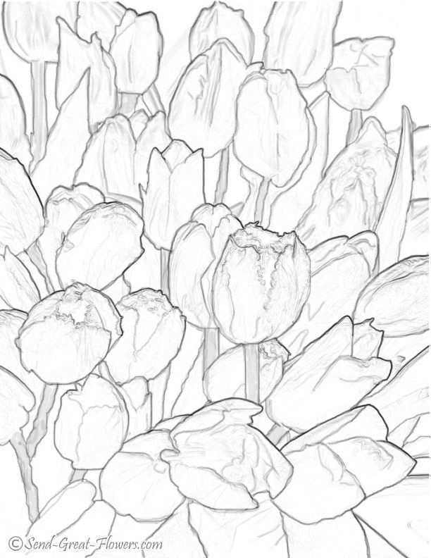 Hard Coloring Pages Print Each Saved Tulip Coloring Page According To Your Default Kleurplaten Kleuren Drawing