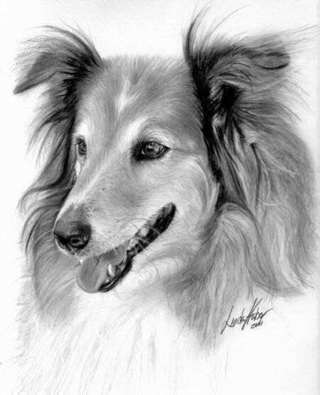 Mi Propio Arte Dibujos En Carboncillo Hond Tekeningen Dieren Kleurplaten Dieren