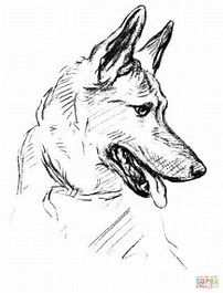 Image Result For German Shepherd Line Drawing Dog Coloring Book Dog Coloring Page Dog Portraits