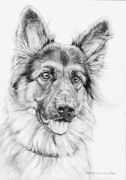 Coloring For Adults Kleuren Voor Volwassenennew Animal Coloring Book Here Amazing Pictures Http Www Amaz Dieren Tekenen Hond Tekeningen Huisdier Portretten