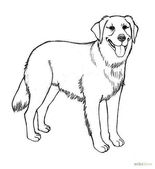 Easy To Draw Golden Retriever Google Search Golden Retriever Drawing Dog Coloring Page Puppy Coloring Pages