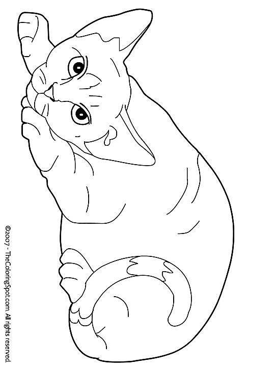 Kleurplaat Kleurplaat Poezen 3787 Kleurplaten Katten Tekening Kleurboek