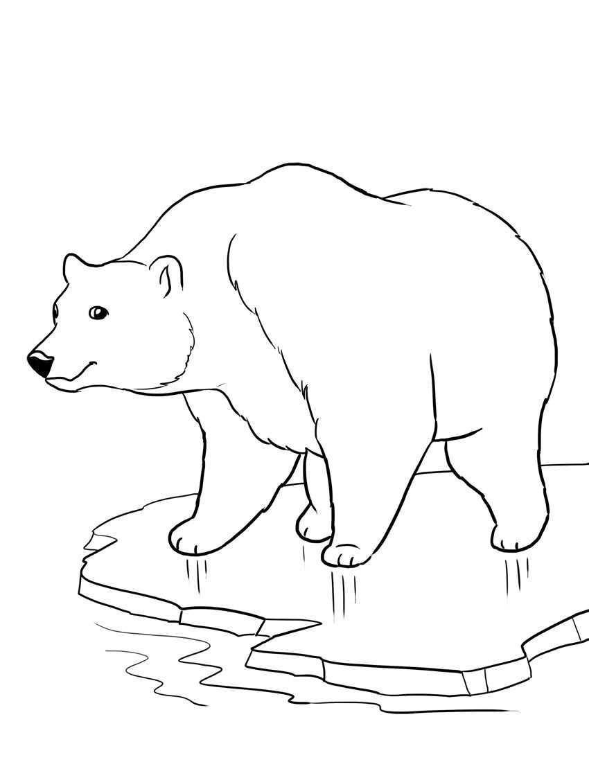 Isbjorn Malarbild Polar Bear Coloring Page Animal Coloring Pages Bear Coloring Pages