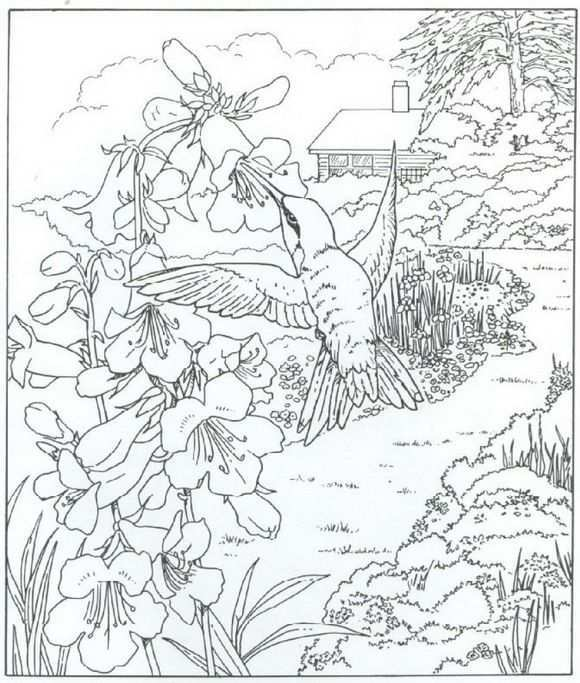 40 Coloring Pages Of Nature Around The House On Kids N Fun Co Uk Op Kids N Fun Vind Je Altijd Bird Coloring Pages Animal Coloring Pages Coloring Pages Nature