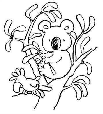 Leuke Kleurplaat Koala Beertje Op Kids N Fun Nl Dieren Kleurplaten Gratis Kleurplaten Koala