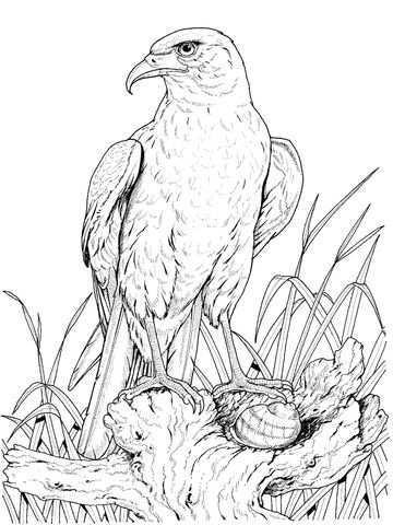 Zittende Goudarend Kleurplaat Gratis Kleurplaten Printen Vogels Tekenen Gratis Kleurplaten Dieren Kleurplaten