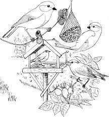 Marjolein Bastin Kleurplaten Google Zoeken Kleurplaten Vogels Thema