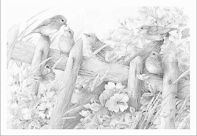 Coloring For Adults Kleuren Voor Volwassenen Marjolein Bastin Art Nature Artists