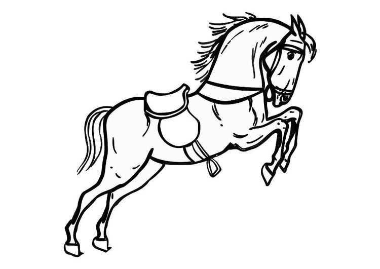 Kleurplaat Springend Paard Afb 10361 Gratis Kleurplaten Kleurplaten Dieren Kleurplaten