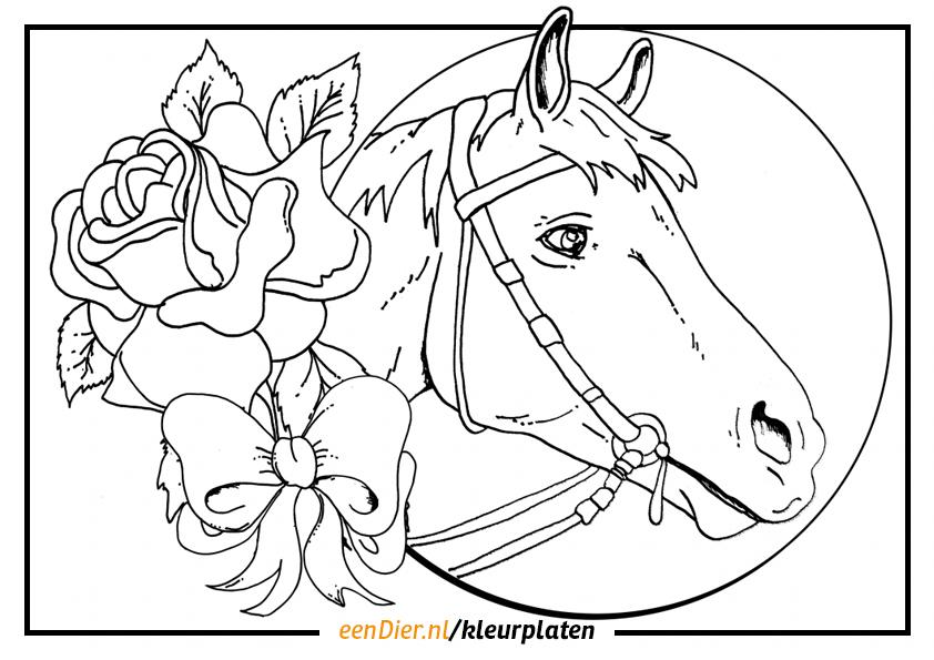 Kleurplaat Paard Google Zoeken Kleurplaten Kleuren Paarden