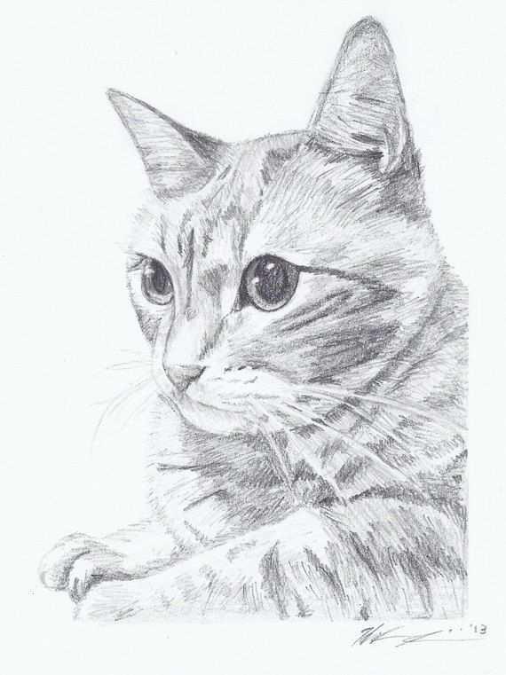 Deze Kat Is Mooi Om Te Tekenen Maar Ook Zeer Moeilijk Dieren Tekenen Kat Schets Katten Tekening