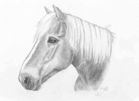 Pin Van Rosalie Op Tekenen Dieren Tekenen Paard Tekeningen Tekenen