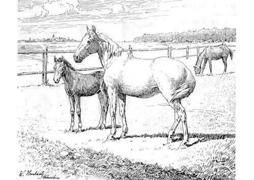 Afbeeldingsresultaat Voor Tekeningen Extra Moeilijk Paarden Dieren Tekening Dieren Tekenen Dieren Tek In 2020 Dieren Tekenen Dieren Kleurplaten Paarden