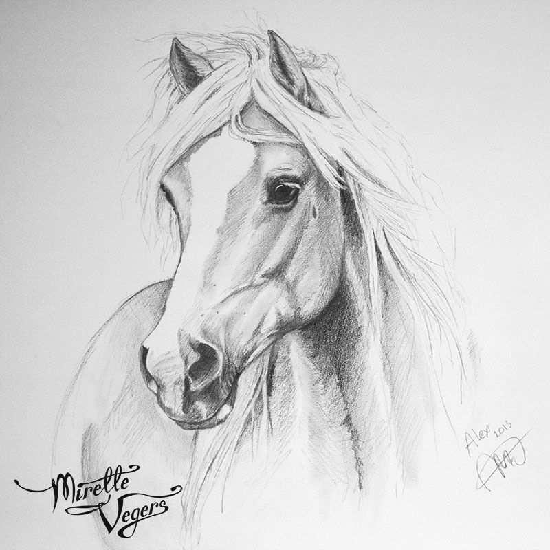Alex Haflinger Horse Portrait Graphite On Paper Portrait On Commission By Equine Artist Mirelle Ve Paard Tekeningen Dieren Tekenen Prachtige Tekeningen