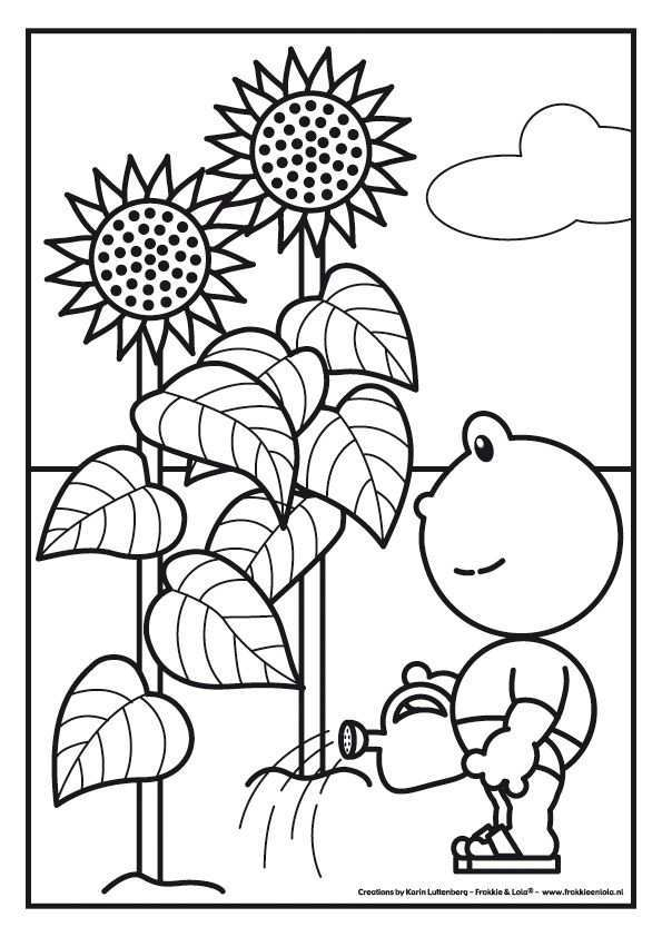 Frokkie Lola Kleurplaten Zonnebloemen Zonnebloem Knutselen Lentebloemen