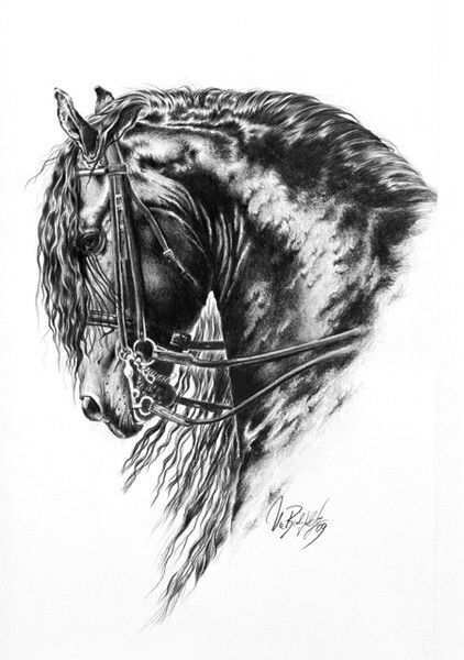 Friese Paard Tekeningen Dierlijke Schilderijen Fries Paard