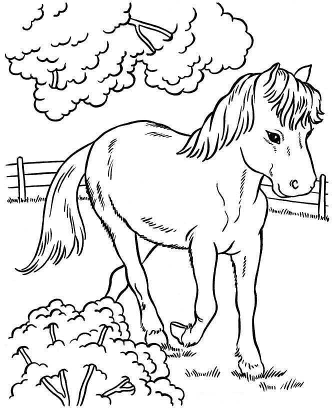 Kleurplaten En Zo Kleurplaat Van Paarden Kleurplaten Kleurboek Dieren Kleurplaten