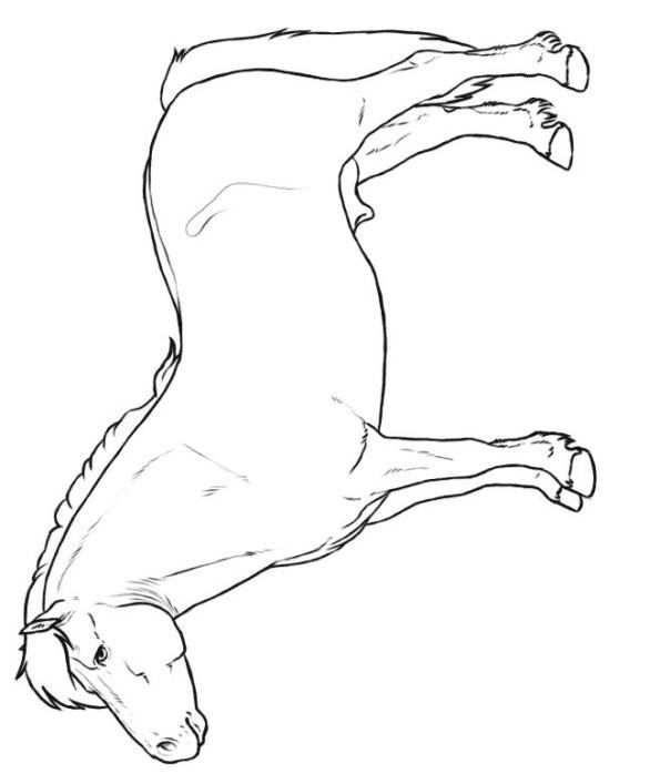 Shetland Pony Coloring Page Kleurplaat Paard Tekeningen Geschilderde Paarden Paard Kunst