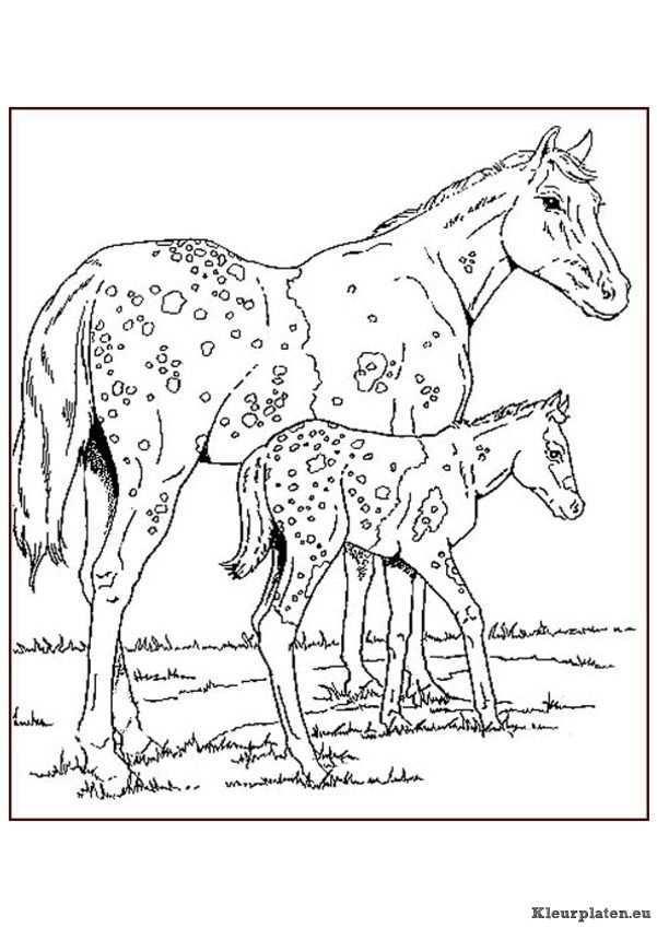 Pin Van Theressa Hudspeth Op Color Horses Donkeys Mules And Tack Dieren Kleurplaten Kleurboek Kleurplaten Voor Volwassenen