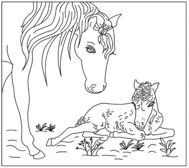 Paard En Veulen Kleurplaten Gratis Kleurplaten Paarden