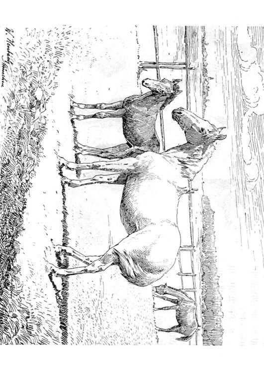 Kleurplaat Paard Met Veulen Afb 9772 Kleurplaten Paarden Gratis Kleurplaten