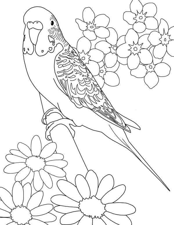 Beautiful Parakeet And Flower Coloring Page Bird Coloring Pages Flower Coloring Pages Animal Coloring Pages