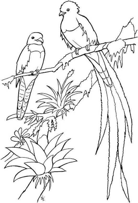 Bird Coloring Page Bird Coloring Pages Coloring Pages Animal Coloring Pages