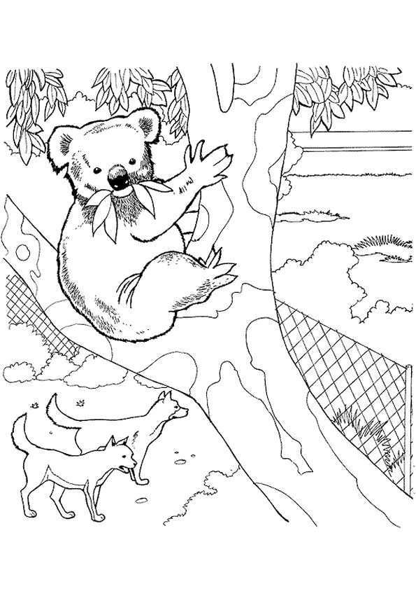 Kleurplaat Zoo Dierentuin 7112 Kleurplaten Zoo Animal Coloring Pages Bear Coloring Pa
