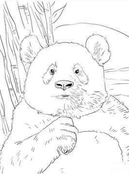 Coloring Page Panda Panda In 2020 Tekenen