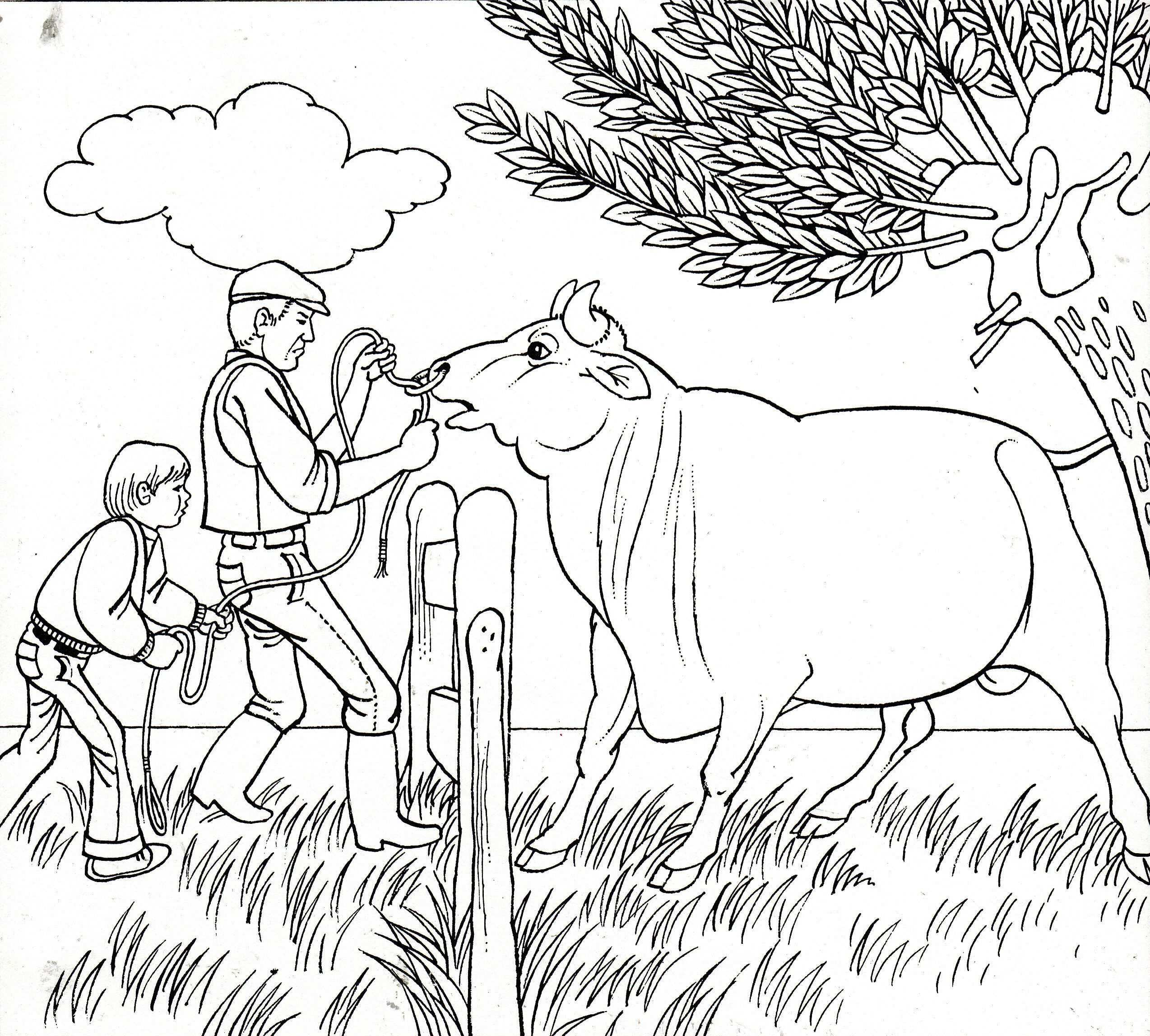 Stier Bull Coloring Pages Taurus Zodiac