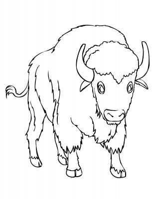 An American Bison Or Buffalo Kleurplaten Indiaan Drawing