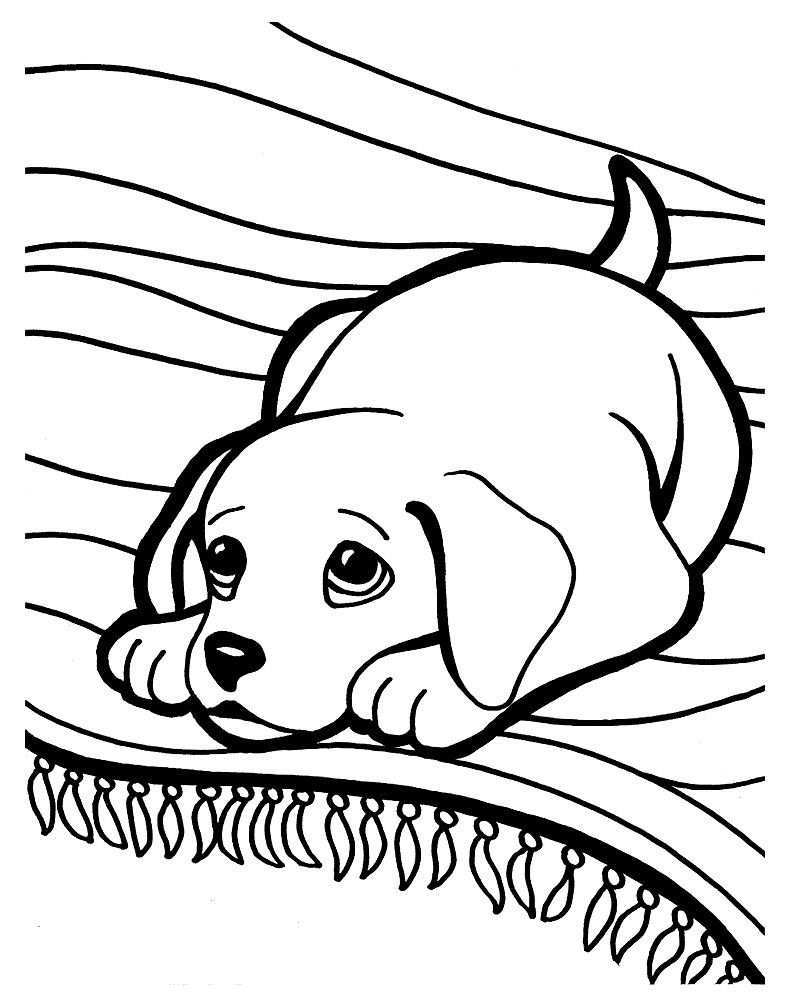 4 Golden Retriever Coloring Pages Puppy Coloring Pages Coloringcks Puppy Coloring Pages Dog Coloring Page Animal Coloring Pages