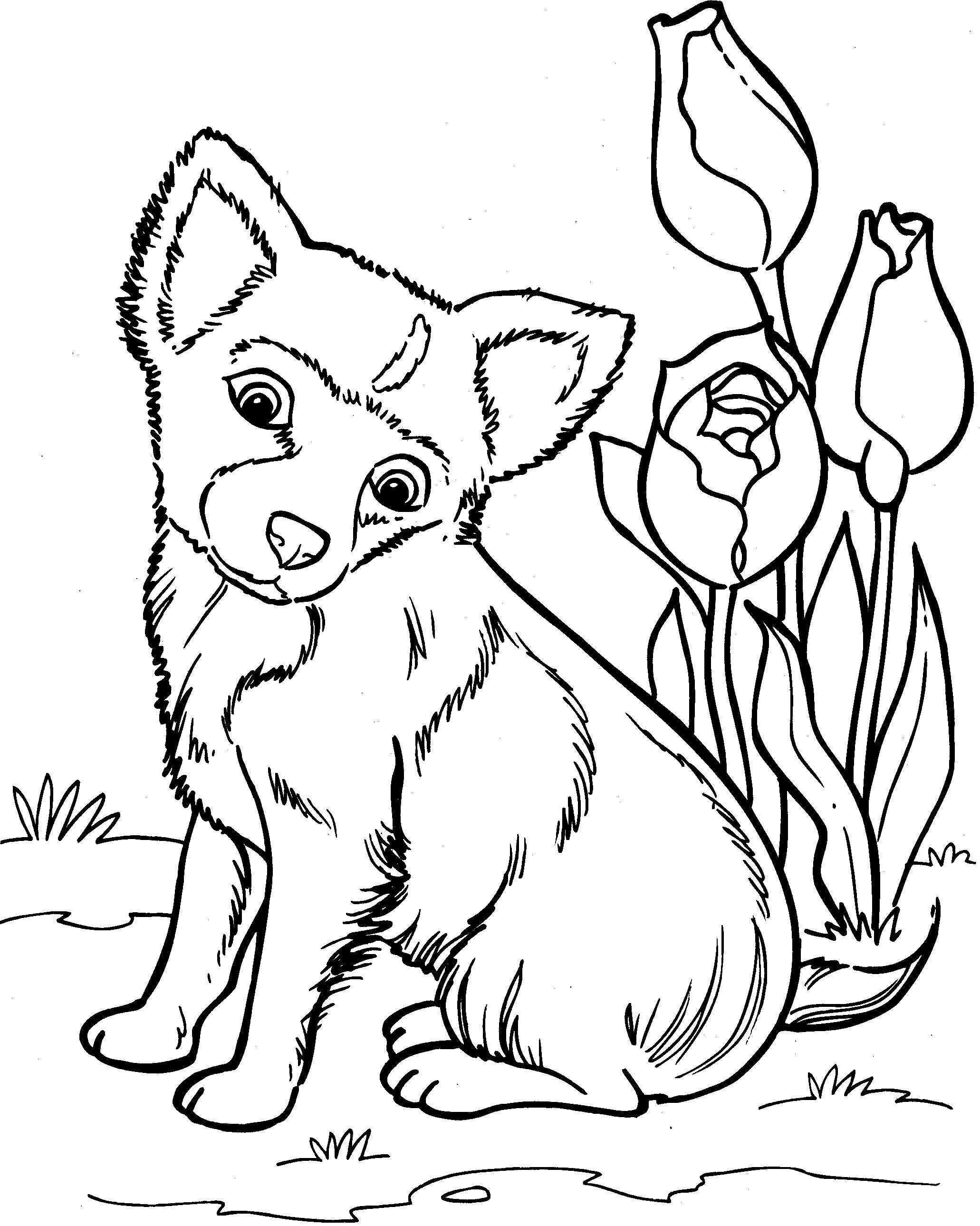 Dieren Tekenen Kleurplaten Honden