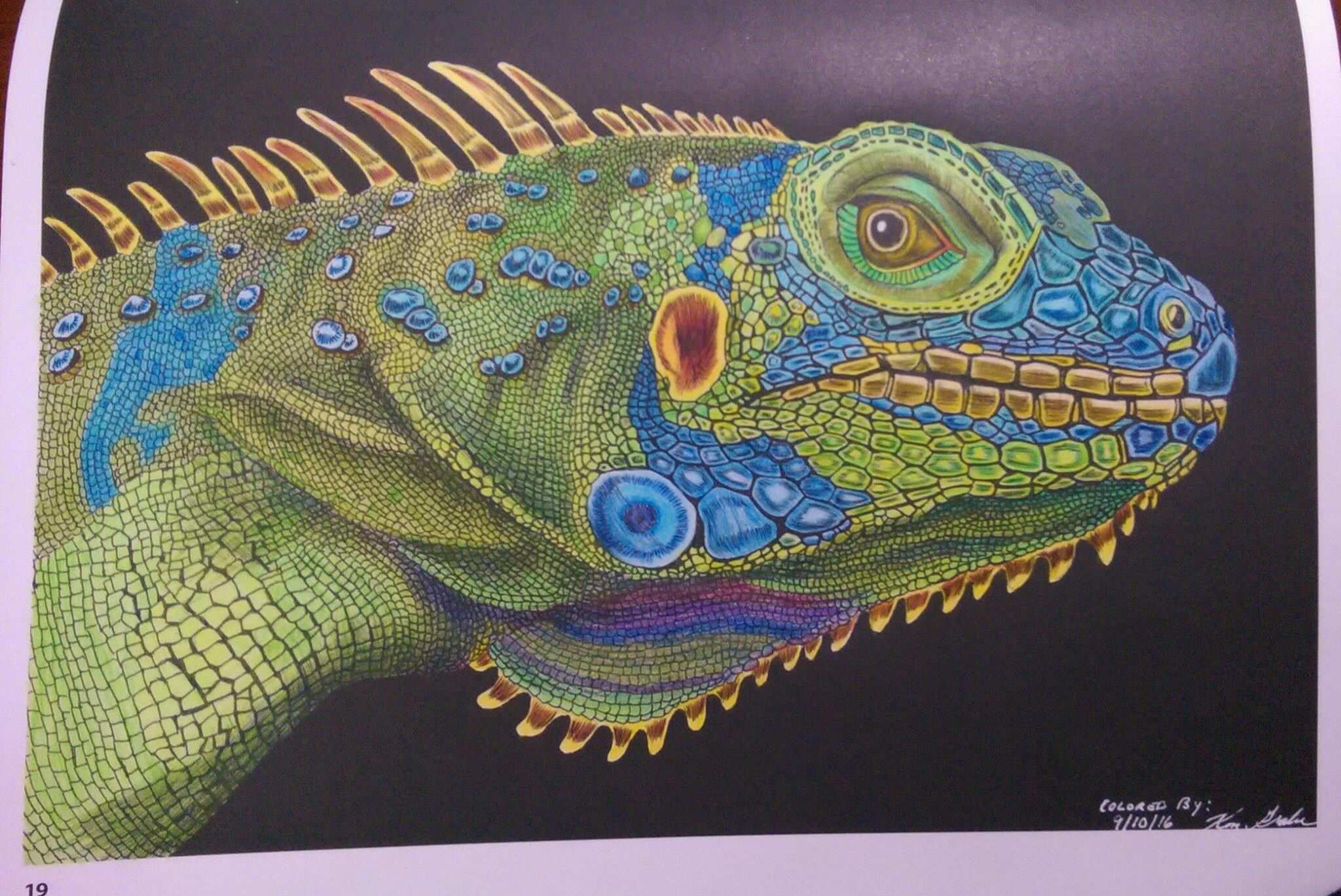 Iguana By Ken Grabe Coloring Contest Animal Drawings Lizard