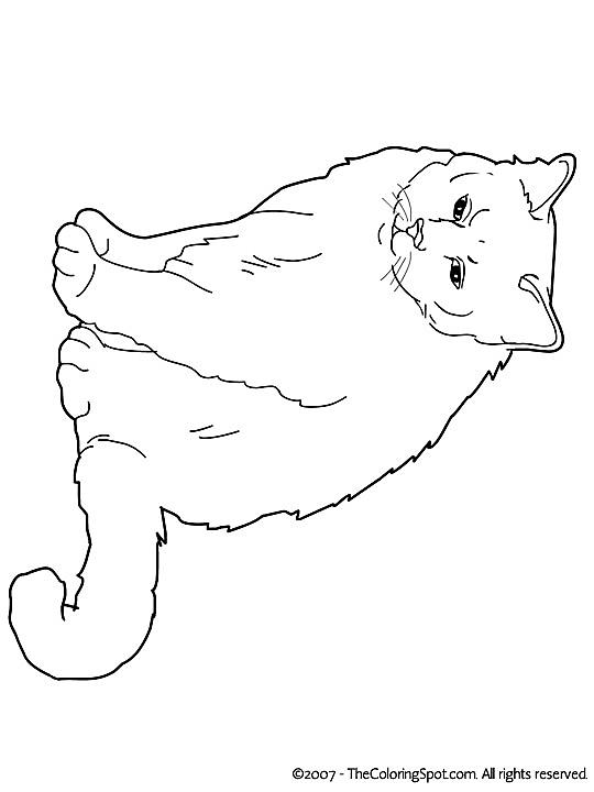 Kleurplaat Kleurplaat Poezen 3784 Kleurplaten Katten Tekening Dieren Tekenen