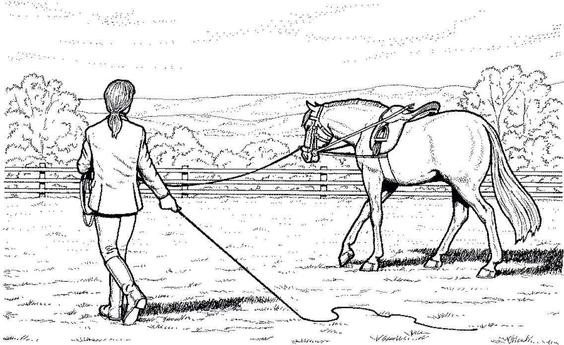Lineart Farm Animal Coloring Pages Horse Drawings Horse Painting